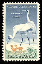 1957 US 3 Cent Wildlife Conservation Whooping Crane Postage Stamp.
