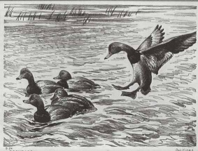 Original artwork for 1946-47 Federal Duck Stamps and Prints.